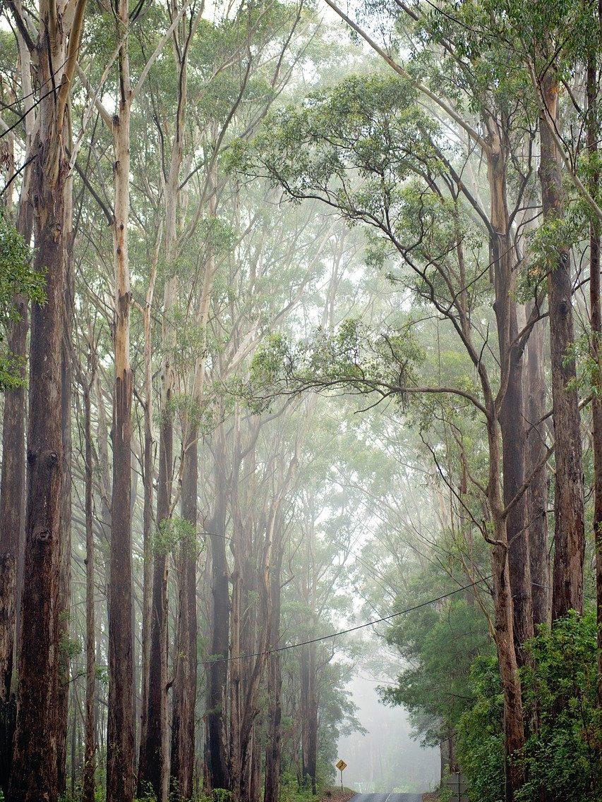 australia, road, mist-5385056.jpg
